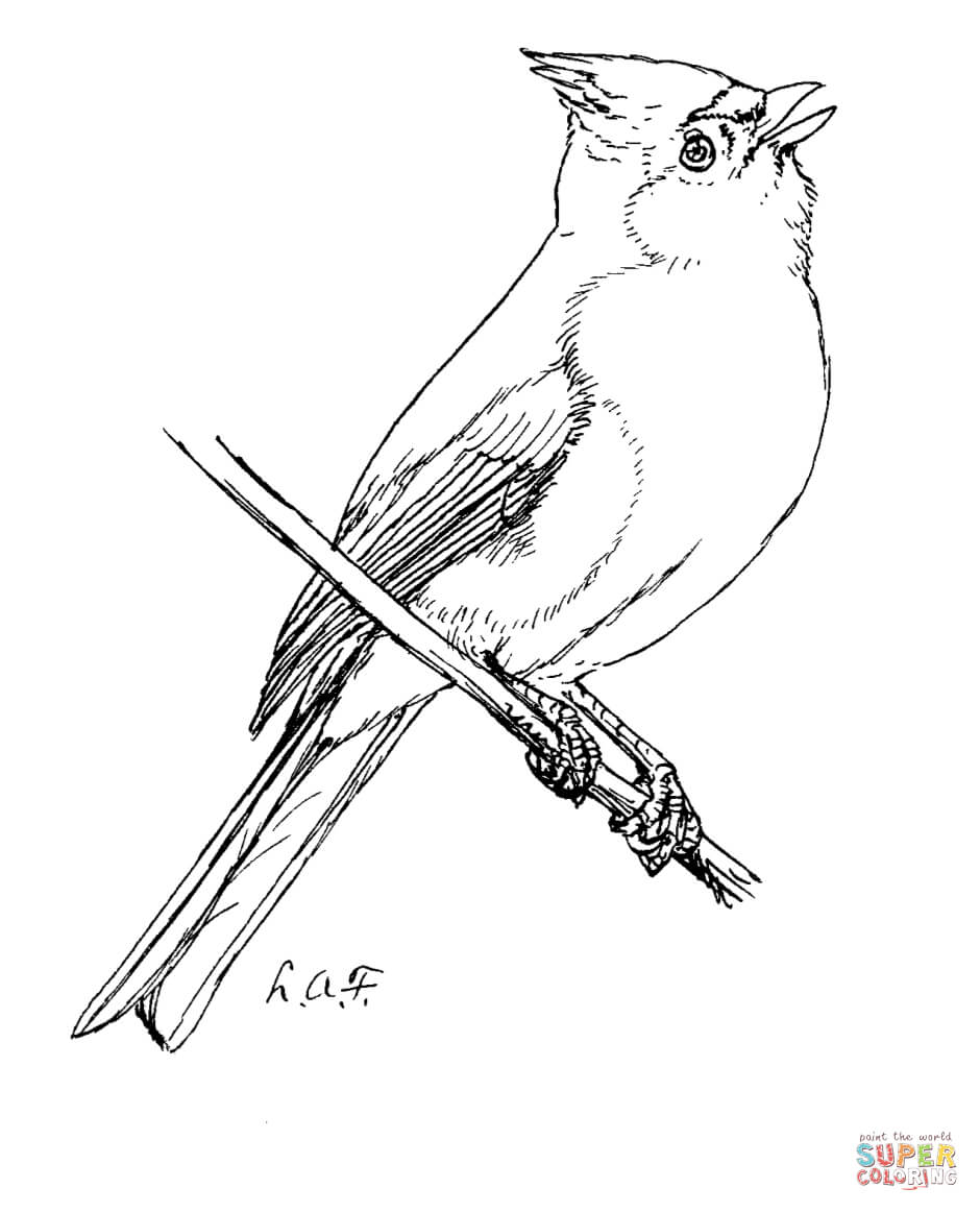 Tufted-Titmouse-coloring-page